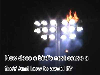 How does a bird's nest cause a fire? And how to avoid it?