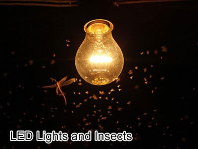 LED Lights and Insects