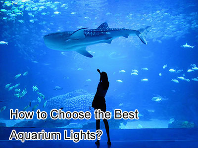 How to Choose the Best Aquarium Lights?